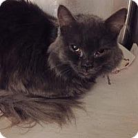 Adopt A Pet :: Ray - Cerritos, CA