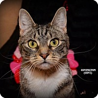 Adopt A Pet :: Covington - Independence, MO