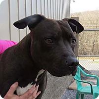 Adopt A Pet :: Amos - Covington, VA