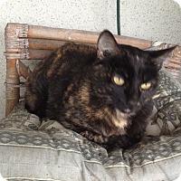 Adopt A Pet :: Caro - Sherman Oaks, CA