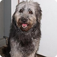 Adopt A Pet :: 'FOO FU' - Agoura Hills, CA
