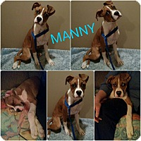 Adopt A Pet :: Manny - Garden City, MI