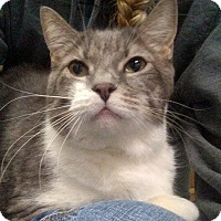 Adopt A Pet :: Thumper - Austintown, OH