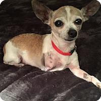 Adopt A Pet :: Bailey - Sparta, NJ