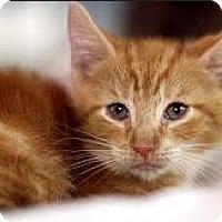Adopt A Pet :: Braeburn - New York, NY