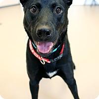 Adopt A Pet :: Chuck - Appleton, WI