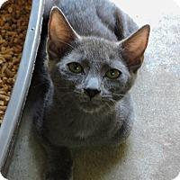 Adopt A Pet :: Patron - Greenwood, SC