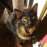 Adopt A Pet :: Clara - Enid, OK