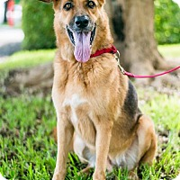 Adopt A Pet :: Kodiak - Miami, FL