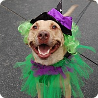 Adopt A Pet :: Latte - Wilmington, DE