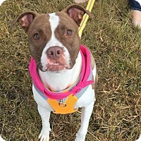 Adopt A Pet :: Dolly - Channahon, IL