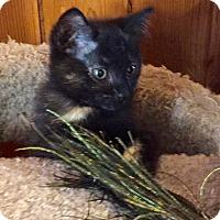 Adopt A Pet :: Lilly - Salem, OR