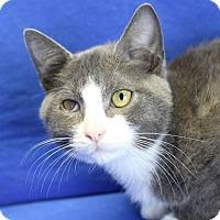 Adopt A Pet :: Stirling - Winston-Salem, NC