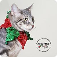 Adopt A Pet :: Striker - Apache Junction, AZ