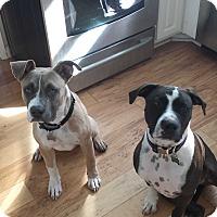 Adopt A Pet :: Buck - San Diego, CA