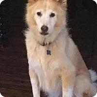 Adopt A Pet :: Fred - New Smyrna Beach, FL