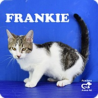 Adopt A Pet :: Frankie - Carencro, LA