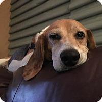 Adopt A Pet :: Duncan II - Tampa, FL