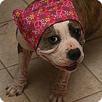 Adopt A Pet :: Rainbow - San Diego, CA