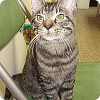 Adopt A Pet :: Tiny - Germansville, PA