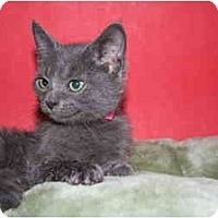 Adopt A Pet :: SHARON - SILVER SPRING, MD