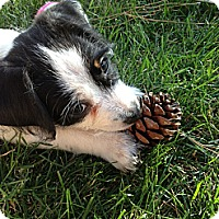 Adopt A Pet :: Fin - Phoenix, AZ