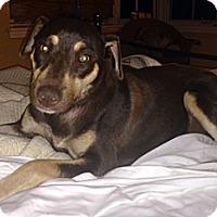 Adopt A Pet :: Cinnamon - Long Beach, CA