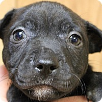 Adopt A Pet :: Storm - North Olmsted, OH
