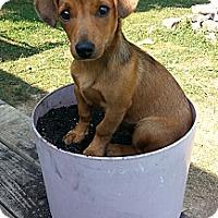 Adopt A Pet :: Flanders - Russellville, KY