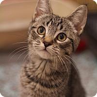 Adopt A Pet :: Kaye - Sacramento, CA