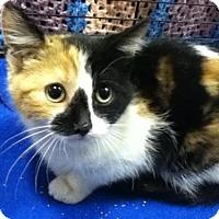 Adopt A Pet :: Maggie - Hamilton, ON
