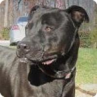 Adopt A Pet :: Sasha - Lincolnton, NC