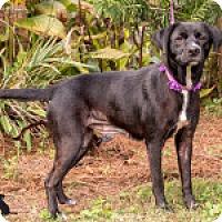 Adopt A Pet :: Arwen - Savannah, GA