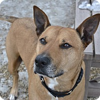 Adopt A Pet :: Caymen - Meridian, ID