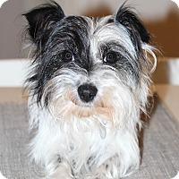 Adopt A Pet :: Pepper - Atlanta, GA