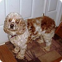 Adopt A Pet :: Angus - Alpharetta, GA