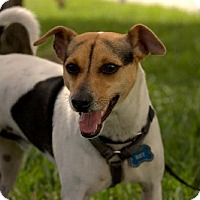 Adopt A Pet :: Roy - Miami, FL