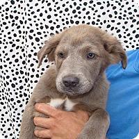 Adopt A Pet :: Vagabond - Oviedo, FL