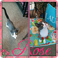 Adopt A Pet :: Rose - Maryville, TN