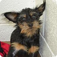 Adopt A Pet :: Cadence - Miami, FL