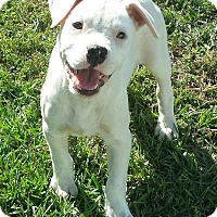 Adopt A Pet :: Nikki - Williston, FL