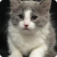 Adopt A Pet :: Beau 160506 - Atlanta, GA