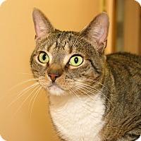 Adopt A Pet :: George - Milford, MA