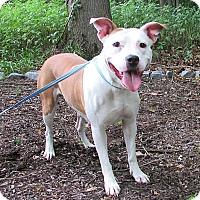 Adopt A Pet :: Sweet Pea - Washingtonville, NY