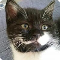 Adopt A Pet :: Leche - Miami, FL