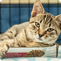 Adopt A Pet :: Barnie - Gainesville, FL