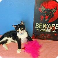 Adopt A Pet :: Jasmine - Glendale, AZ