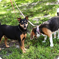 Adopt A Pet :: Betsy and Pinnochio - Jupiter, FL
