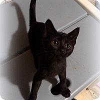 Adopt A Pet :: Hershey - Millersville, MD