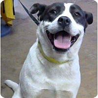 Adopt A Pet :: Ice - Wytheville, VA